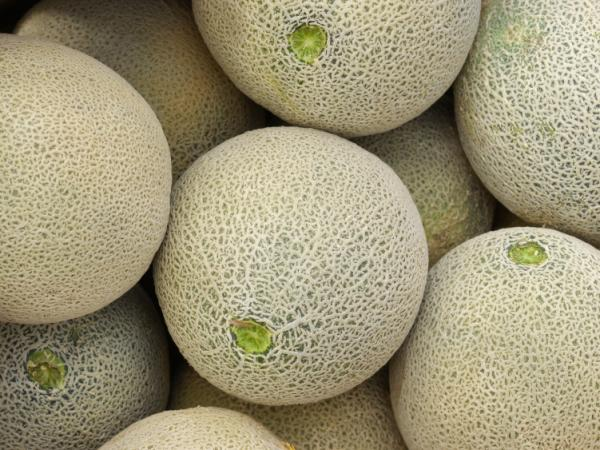 Do you really know where those cantaloupes have been?