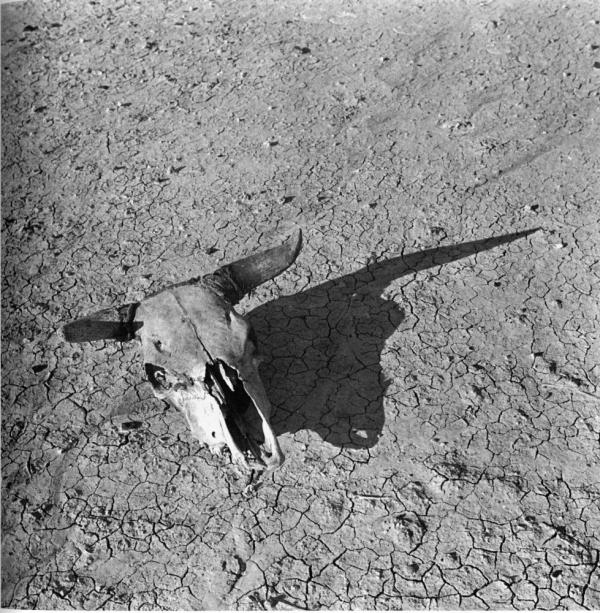 <em>Overgrazed Land. Pennington County, South Dakota</em> (1936) is one of several photographs Arthur Rothstein took to document dry, sun-baked earth of the South Dakota  Badlands.