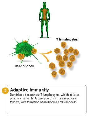 <p>An illustration of adaptive immunity.</p>