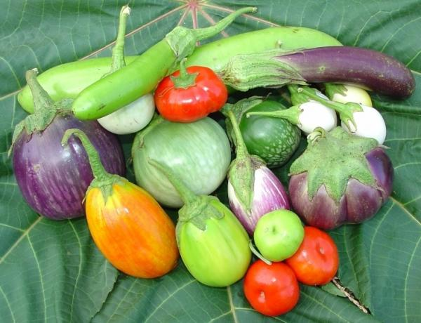<p>Jere Gettle's Baker Creek Heirloom Seed Company offers seeds for 62 different varieties of eggplant.</p>