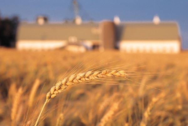 Photo courtesy USDA