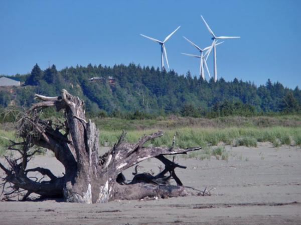 Wind turbines spin above Grayland Beach State Park. Photo by Tom Banse