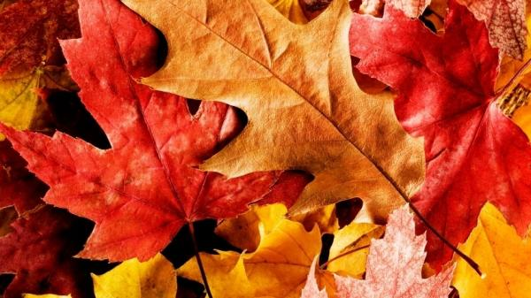 "<p>The National Audubon Society considers fall leaves to be ""natural vitamins"" to use in yards. </p>"