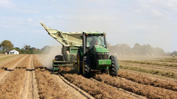 A peanut combine rolls over rows of peanuts, picking them off the vine on Benny Johnston's farm in Ocilla, Ga. Because of the weather and other crop prices, the price of peanuts has been rising.