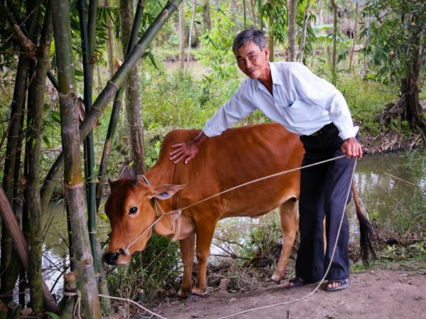 A man with a cow in Dong Thap Province in southern Vietnam. The man received his cow from Heifer - as well as training and resources to care for it.
