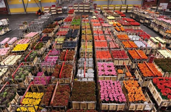 The flower auction house in Aalsmeer, the Netherlands, is one of the largest in the world — and a part of the country's strong export base. As Europe's debt crisis continues, the Dutch economy is feeling the effects of being heavily reliant on world trade.