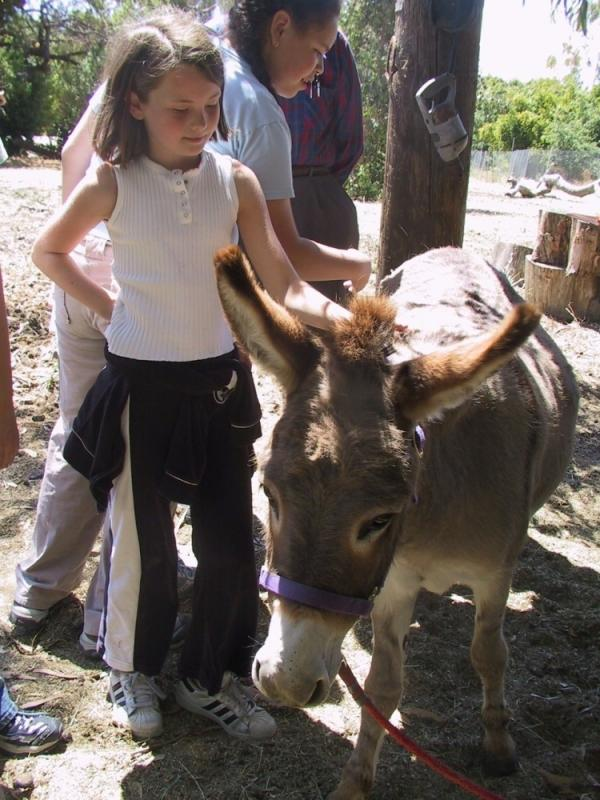 Two donkeys, cared for by the community, live on Witt's property. The donkeys attract daily visits from children, in part because one of the animals was the model for the Donkey character in the <em>Shrek</em> movies.
