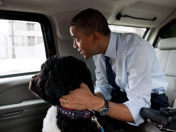President Obama traveled in the presidential limo with his dog, Bo. Adviser David Axelrod tweeted this photo from the White House Flickr account to tweak the Romney campaign.