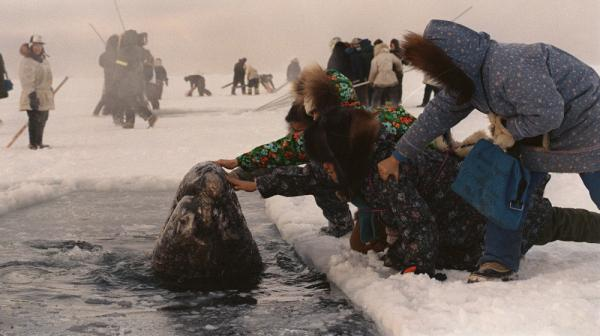 Women in Alaska reach out to touch one of the trapped whales in October 1988. Journalist Tom Rose was sent to cover the dramatic rescue. His book has been adapted into a movie called <em>Big Miracle.</em>