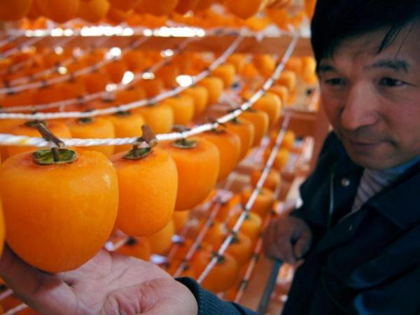 Peeled persimmon is a traditional food of Tohoku.