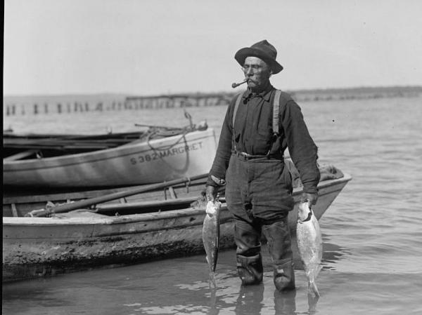 A fisherman pulls shad from the Potomac River in the early 1900s.
