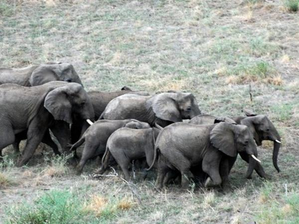Elephants cross the bush in South Sudan.