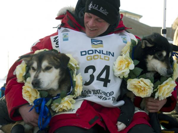 Dallas Seavey holds his leaders, Diesel, left, and Guiness, after he arrived at the finish line to claim victory in the Iditarod Trail Sled Dog Race in Nome, Alaska, on Tuesday, March 13, 2012.