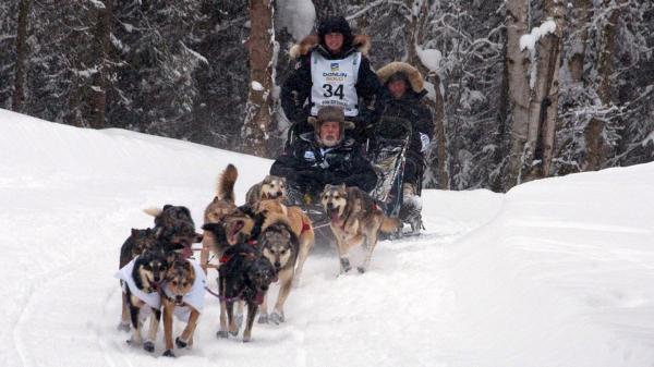2012 Iditarod winner Dallas Seavey's team climbs a hill. Seavy has guest riders on his sled for the ceremonial start of the race.