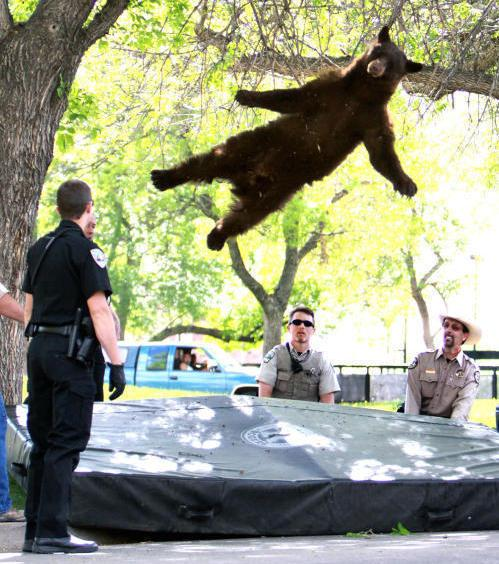 "The ""falling bear"" photo that brought him fame."