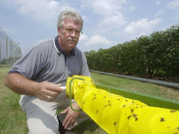 Lehr rolls in a section of a mosquito trap which is set up near the turf course at the track Aug. 13, 2002, in Louisville, Ky.