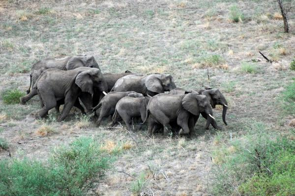 During Sudan's civil war, rebel soldiers ate much of the region's wildlife to survive. But an estimated 5,000 elephants have survived.