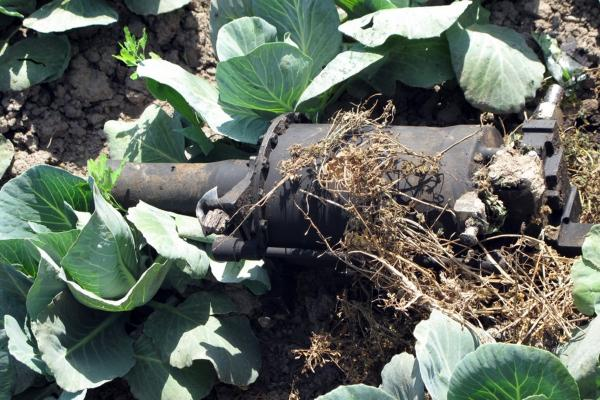 Debris is seen in the cabbage patch beside the compound, possibly from the helicopter that U.S. officials said malfunctioned during the raid on the al-Qaida chief's hideout.