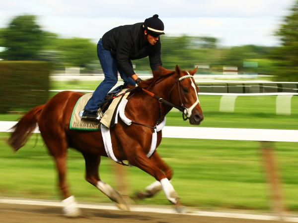 I'll Have Another training earlier this week at Belmont Park in Elmont, N.Y.