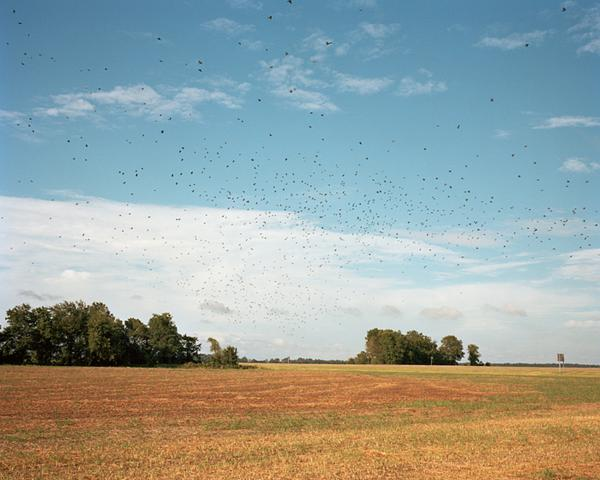 <em>Birds in Flight,</em> 2010