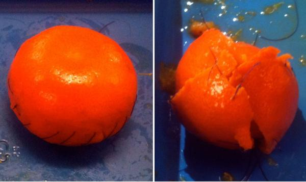 The clementine on the left was operated on by a skilled surgeon. A nonsurgeon operated on the other one.