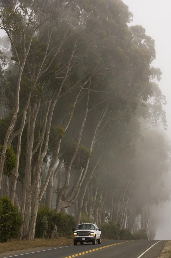 There are millions of killers loose in California, and eucalyptus trees are their victims. Entomologist Timothy Paine has been studying the insects killing California's menthol-scented trees for two decades — and he's noticed a suspicious pattern.
