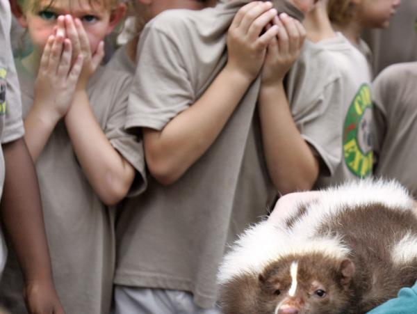 Kids from a Tallahassee day camp hold their noses as they get up close and personal with a live striped skunk during their field trip to the Tallahassee Museum of History and Natural Science on July 19, 2005.