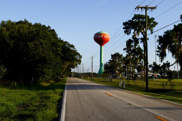 Plant City, Fla. claims to be the winter strawberry capital of the world. Strawberry fields dot the landscape, Amtrak trains roar by, and a giant water tower painted like a strawberry looms over athletic fields.