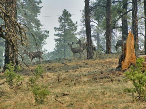 Wildfires have closed some prime hunting grounds in the Northwest. Photo by Dennis Stern/ USFS Gila National Forest