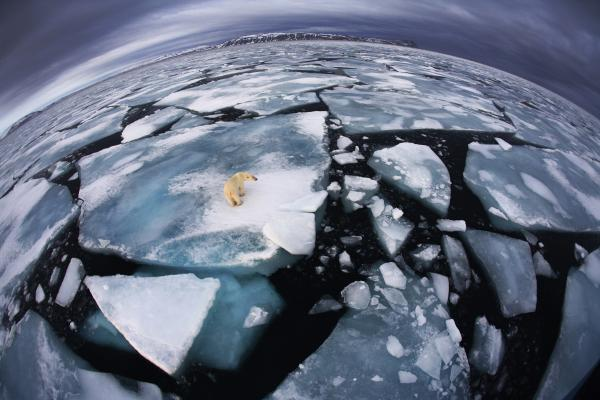 "<em>Winner, The World In Our Hands Award</em> — The photographer was on a boat in Svalbard, an archipelago midway between mainland Norway and the North Pole, when she saw this polar bear at around 4 in the morning. She used a fish-eye lens to make the enormous animal appear diminutive and create an impression of ""the top predator on top of the planet, with its ice world breaking up."""