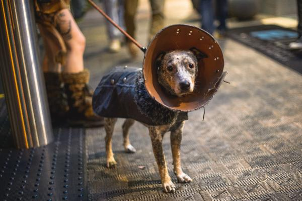 This viking-dog rocks way harder than you.
