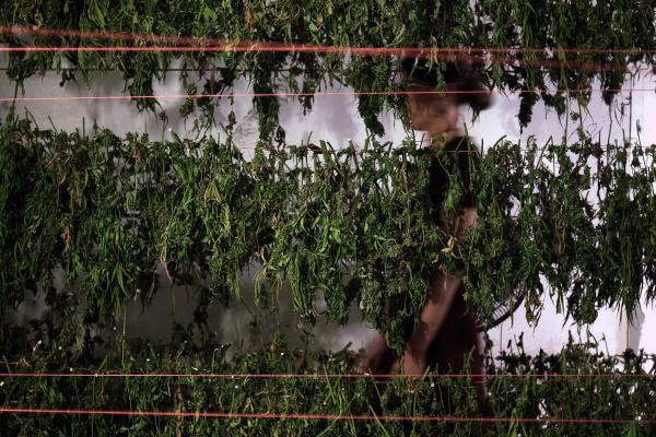 """Grassland"" is a series that peeks behind the curtain of pot production in California."