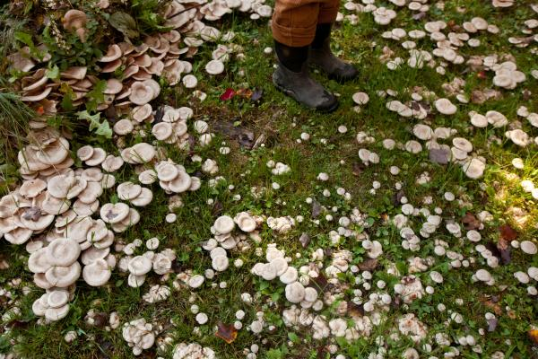 Mushrooms grow in the yard of Maggie Rullo, the landowner who gave the farm (now known as Maggie's Farm) to The Farm School.<br /><br />