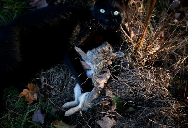 Clutch, one of the farm's cats, with his near-daily kill. Clutch will often leave the carcass at the door of a one lucky student farmer, a messy honor to have.