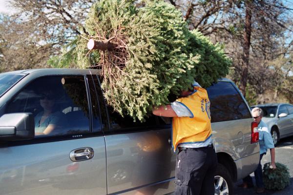 <em>Christmas Tree Shopping,</em> 2011