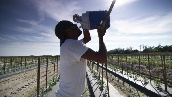 A migrant Florida tomato grower and member of the Coalition of Immokalee Workers drinks from a jug of water. As part of a larger discussion of societal thinking about debt, <em>Payback</em> looks at the sometimes harsh treatment by companies of migrant workers.<em> </em>