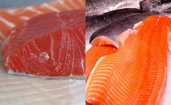 Can you tell a difference?  A wild sockeye salmon fillet (L) and a fillet of farmed Atlantic salmon. Photos by Justin Marx/Flickr and Astacus/Flickr