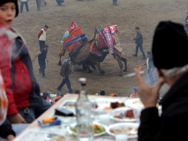 People watch wrestling camels as they enjoy a meal and the Turkish national drink <em>raki</em> during the Camel Wrestling Championship in Selcuk, on Jan. 15, 2012.