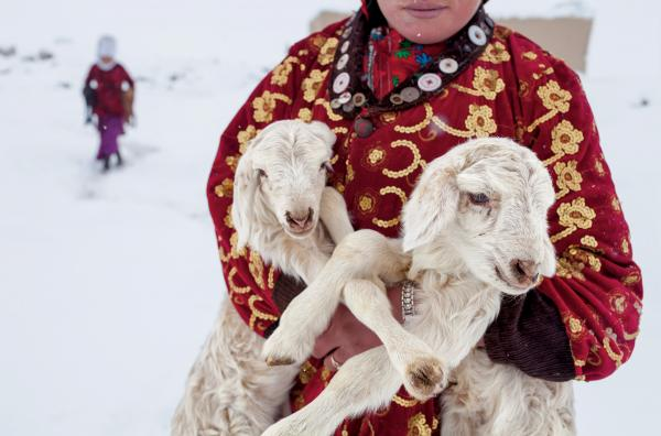 A girl carries a pair of lambs to be reunited with their mothers for the night. On especially cold days the vulnerable young animals are kept warm in cloth bags hung in the herders' huts. The Kyrgyz complain that their winters are brutal. But would they want to call any other place home?