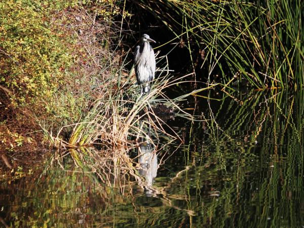Experts say the reserve was home to more than 200 bird species, including the great blue heron.