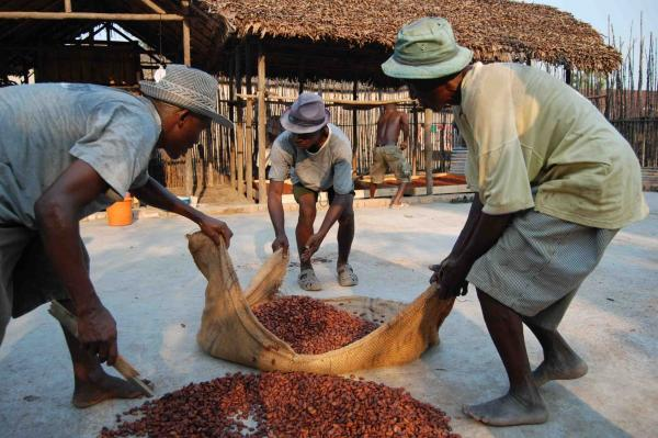 Workers in Madagascar prepare cocoa beans for drying. The process has a big effect on the quality of the finished chocolate.