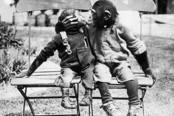 Monkey love kiss