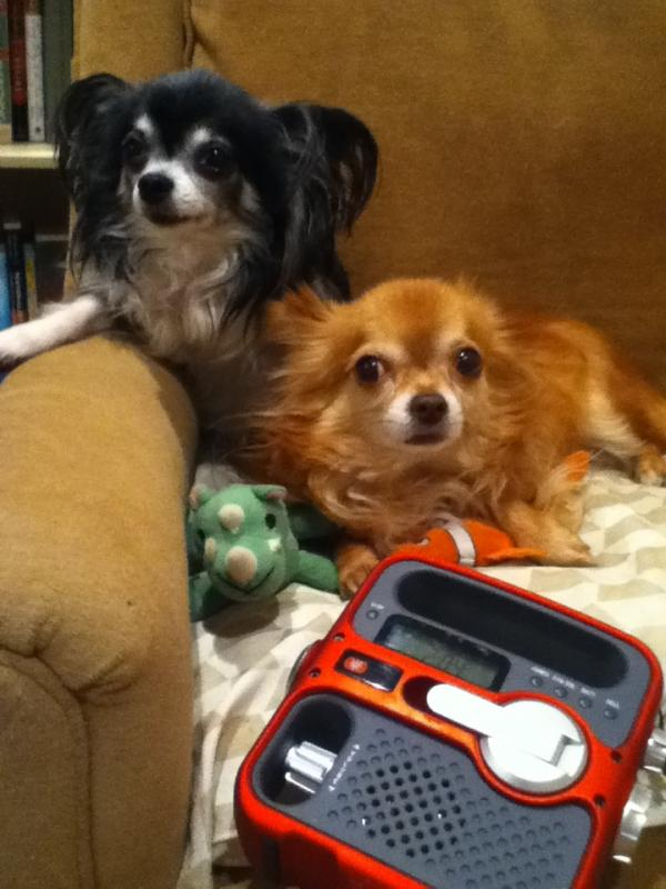 """""""Haiku & Glenn like to lounge in the armchair and listen to NPR on the weather radio that they got for their donation to WFYI in Indianapolis, Indiana."""""""