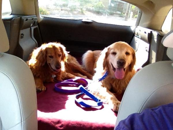 """Zoey (left) and Gus (right) have NPR as the soundtrack to their life. Pictured here, we're listening to Weekend Edition on our way to the dog park. We support several NPR stations (KTEP, KRWG, KCCU and WBEZ), but here, we're listening to KTEP 88.5 in El Paso, TX."""