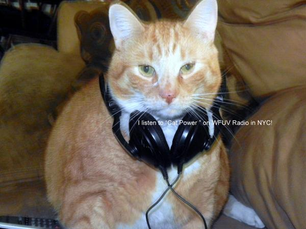 """""""My cat, Sunny Boy, listens to NPR on WFUV in New York City. His favorite artist is Cat Power, but I know he also likes Dr. Dog!"""""""
