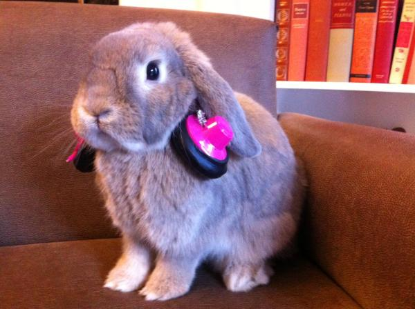 """Cinnamon says NPR Member station KPCC [Southern California] is <em>Buntastic</em>."""