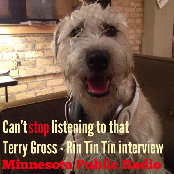 """Clary belongs to two members of Minnesota Public Radio. She's a huge fan of the Classical stream and Fresh Air."""