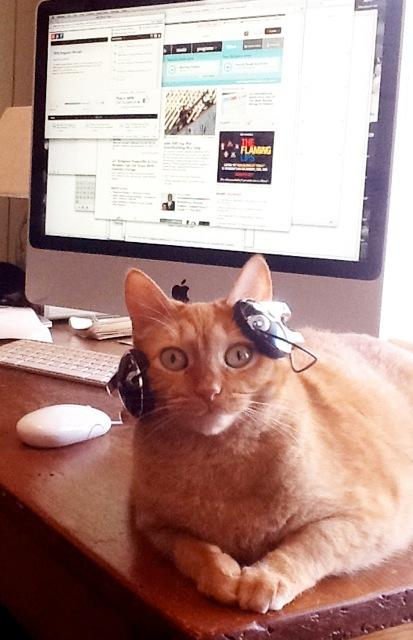 """""""Audrey's favorite thing to do is take over my desk and listen to NPR. She is pictured here plugged into NPR.org but we also listen to NPR Member station WBEZ in Chicago."""""""