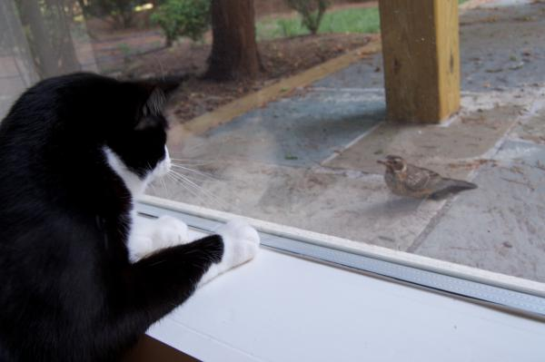 """Willie tells everyone to listen to NPR: <em>'Hey, little bird, tune into WAMU </em>[Washington, D.C.].<em>' </em> Note: This is not two pets--the bird is a free agent."""