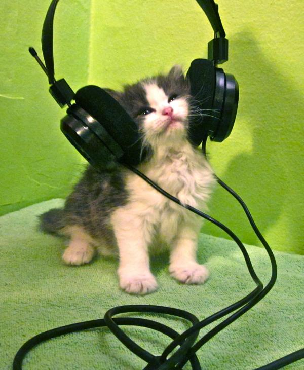"""""""<em>The Kitten Who Says Ni!</em> can not be swayed by feathers or wet meatz when listening to our favorite member station WHYY in Philadelphia!"""""""